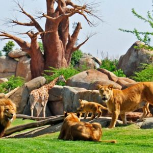 Зоопарк XXI века