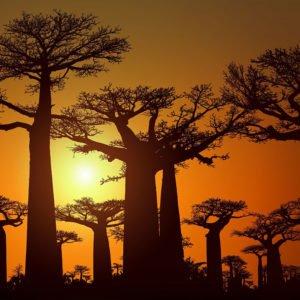 Мадагаскар – развивающееся туристическое направление
